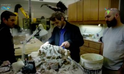 """""""Patagotitan mayorum"""", el coloso argentino de los dinosaurios ya tiene nombre"""