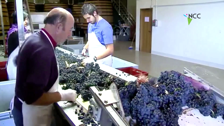 Calentamiento global cambiaría el color del vino