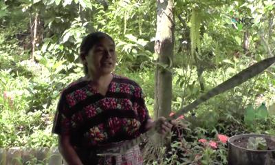 Plan de la OEA rescata medicina ancestral maya en Guatemala