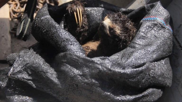 Caza ilegal de animales salvajes en Perú