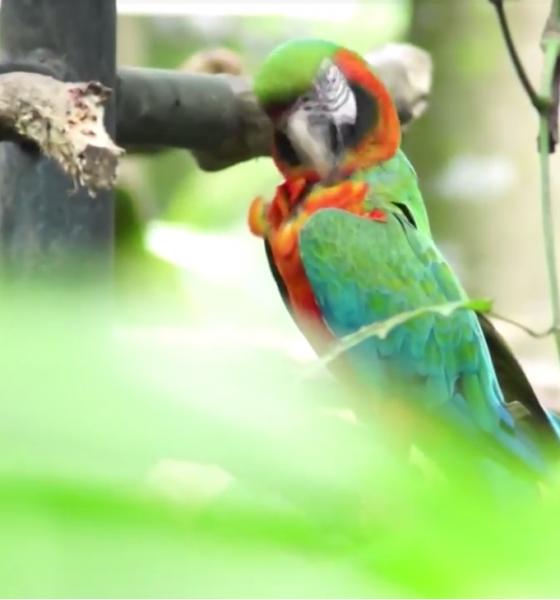 Costa Rica: 1 de cada 4 hogares, mantiene como mascota algún animal silvestre
