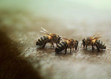 Reunión de abejas