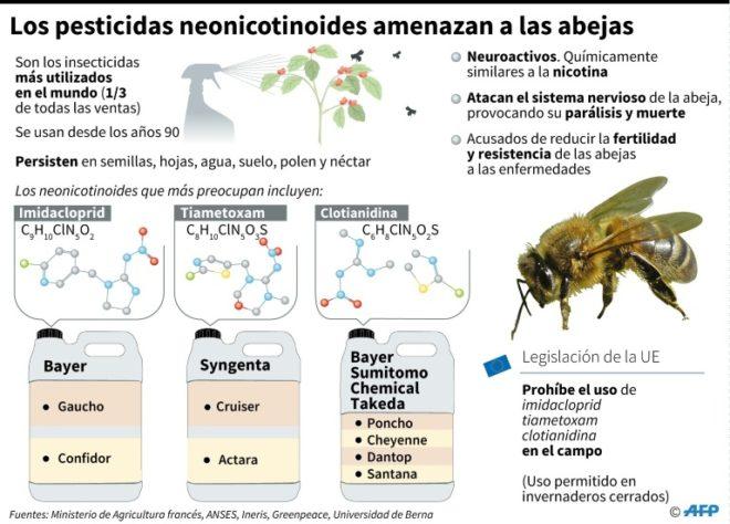 Los pesticidas neonicotinoides y su efecto en las abejas© AFP Elia VAISSIERE
