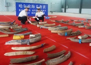 China y Rusia sobre la conservación del medioambiente