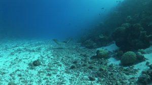 Los microorganismos de la superficie y fondo marino,