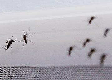 Cura para zika y malaria.