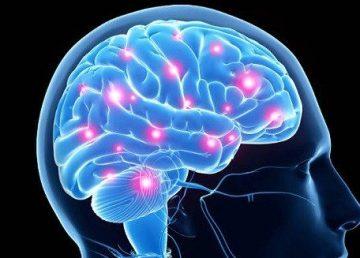 hormonas-cerebro