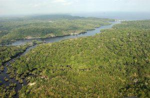 Gobierno brasileño extingue reserva natural amazónica para explorar minerales