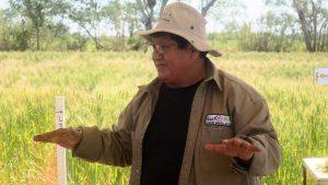 Un proyecto busca consolidar la siembra de quinua en el trópico de Bolivia