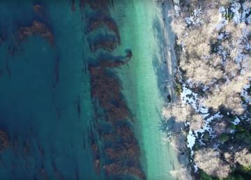 Los bosques submarinos sobreviven al deshielo