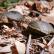 Casquito de Vallarta, nueva especie de tortuga