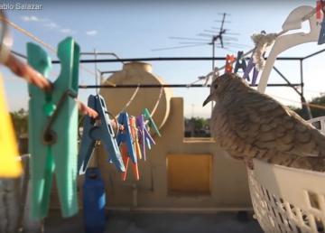 La adaptación de las aves a la ciudad más grande del mundo