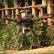 Un Dron que favorece la foresta