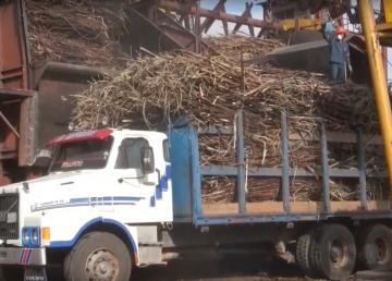 apuesta por producción Biodiesel a base de caña