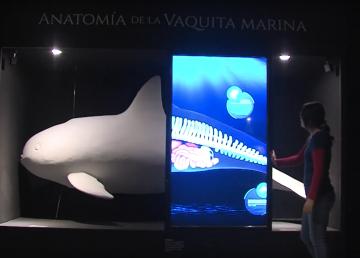 Describir la anatomía de la Vaquita Marina para salvarla