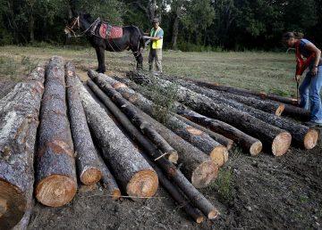 La OCDE espera que se duplique el uso de materias primas para 2060