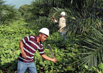 Colombia abre centro de investigación de palma de aceite con énfasis en agua