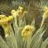 El cambio climático se deja ver en las plantas de los páramos