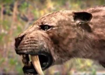 Nueva Especie de tigre dientes de sable