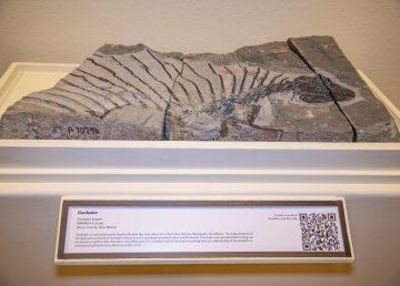 Hallazgo del reptil herbívoro más antiguo da nuevos indicios sobre evolución