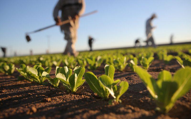 """EE.UU. pide no consumir lechugas romanas en el país por brote de """"E. coli"""""""