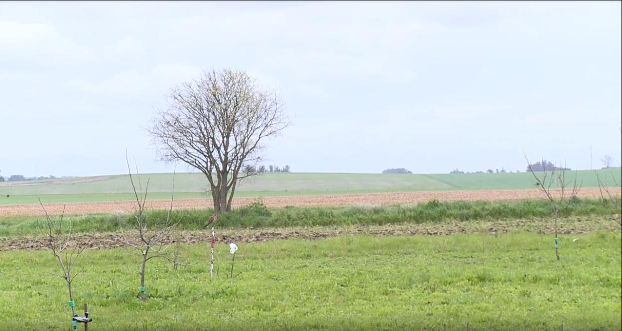 Colaboración, clave en el campo agrícola