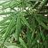 Feria cannabis pregoniza sus beneficios