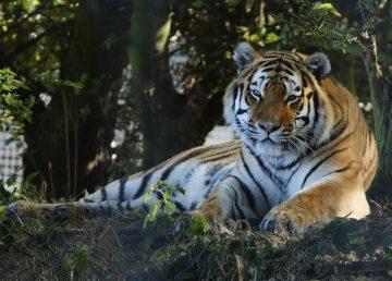 El declive de la fauna afecta todo el Planeta