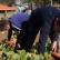 El ABC de un huerto escolar sostenible