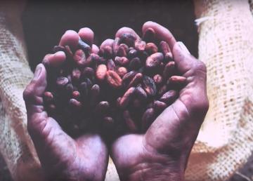 Actualmente unas 100 mil familias ecuatorianas cultivan el grano.