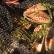 """Perú, potencia mundial en el cultivo de """"conchas abanico"""""""