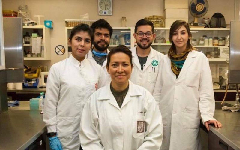 Científicos mexicanos crean sistema para detectar 280 patógenos