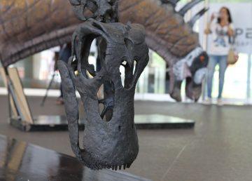 Descubren una especie de dinosaurio saurópodo en la Patagonia argentina