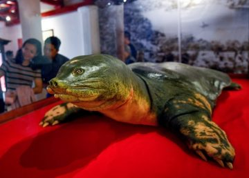 Tortuga sagrada embalsamada para la eternidad en Vietnam