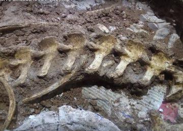 Encuentran restos de un ciervo prehistórico en Argentina