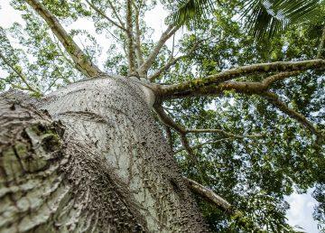 Deforestación amenaza la venta indígena de créditos de carbono en Brasil