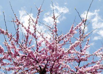 La primavera será calurosa tras el segundo invierno más seco del siglo XXI