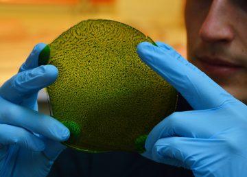 Investigadores desarrollan BioSolar Leaf para mejorar calidad del aire citadino