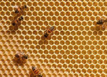 Veneno de abeja tiene efectos positivos contra el mal de Parkinson
