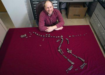 """Descubren pariente del """"Tyrannosaurus rex"""" de menor altura"""