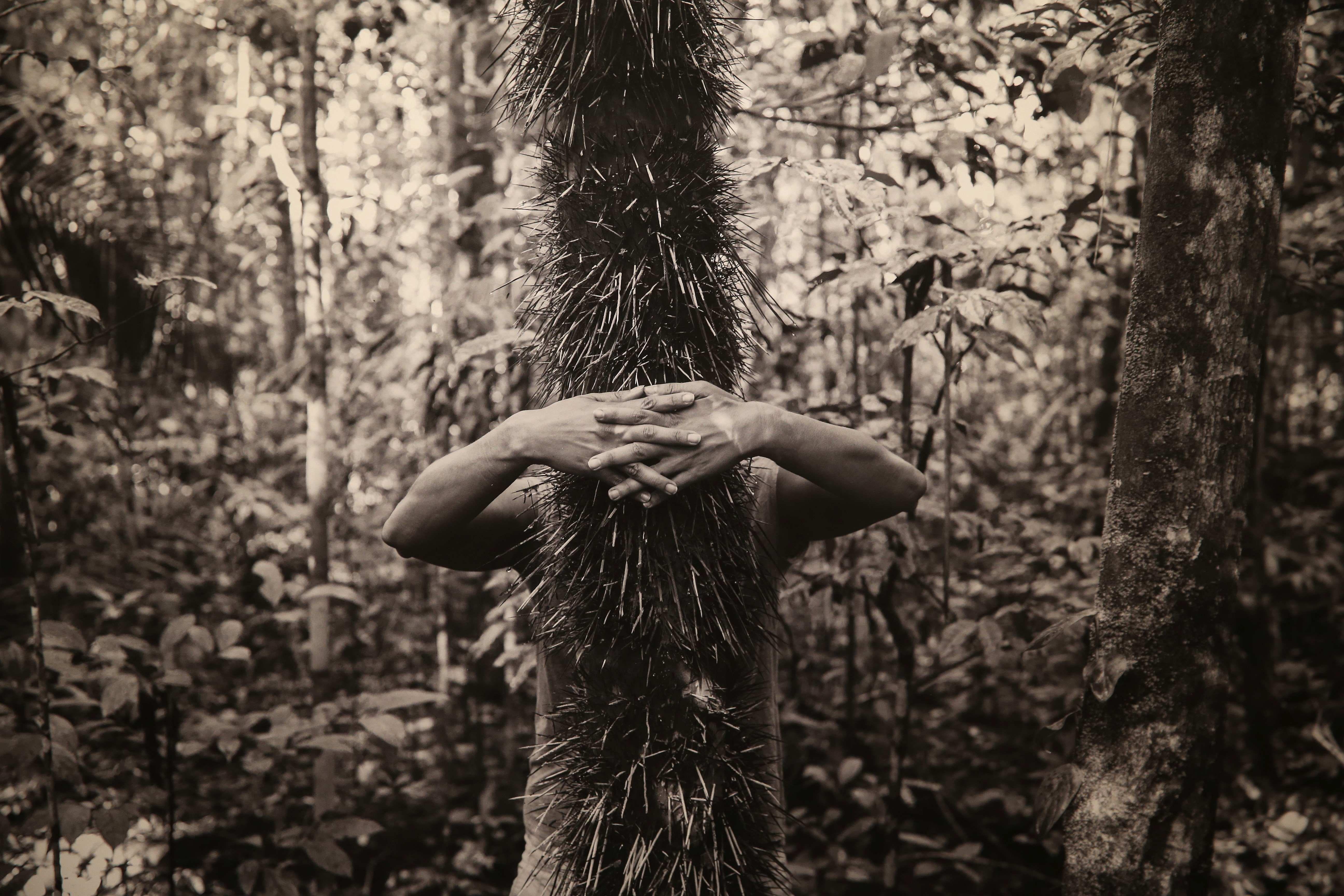 La Amazonía brasileña contada por 20 artistas