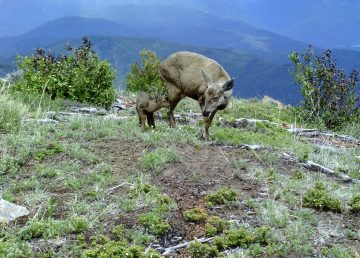 Confirman presencia de una especie en peligro de extinción en Chile