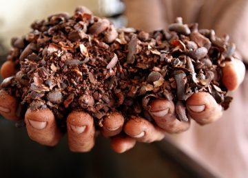 Universidades de Cuba y Bélgica ejecutan un proyecto en el cultivo de cacao