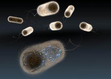 Científicos desarrollan tecnología para detectar bacterias en minutos