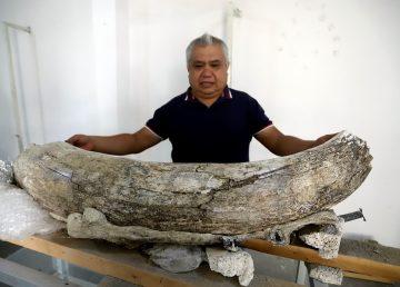 Hallan fósiles animales de entre 10 y 14 mil años en el centro de México