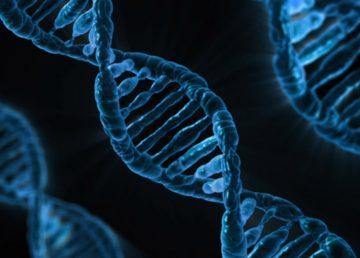 Desarrollan nuevo modelo matemático para ver cómo interactúan los genes