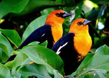 Destaca ONU papel de México en la conservación de especies