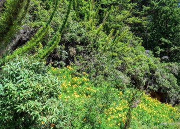 Presenta la Conafor ejes estratégicos de nueva política forestal