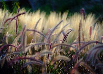 Desarrollan un dispositivo para detectar plantas enfermas sobre el terreno