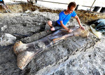 Científicos descubren un gigantesco fémur fosilizado de dinosaurio